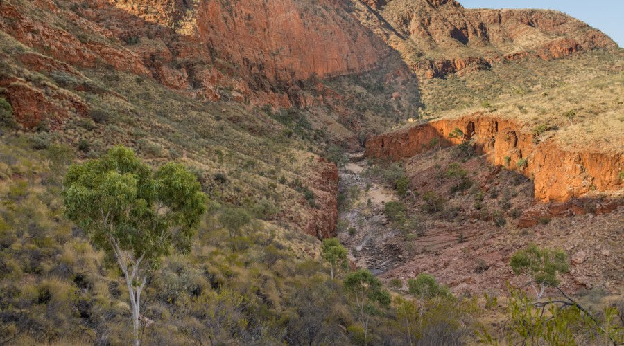 Lizards, Ghost Gums and Gorges