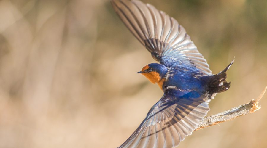 Bird Photos: Keeping The Noise To a Minimum